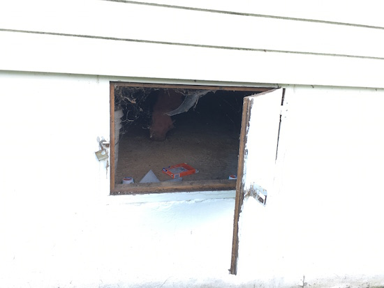An opened crawl space door on the outside of a white farmhouse