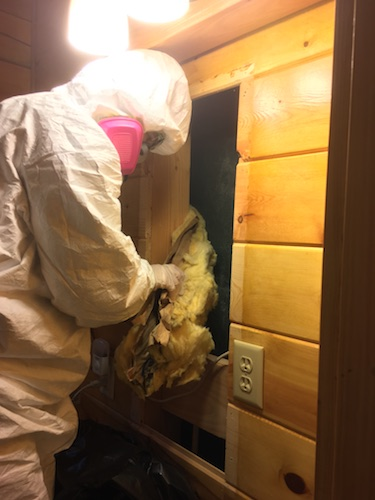 A person in a white hazmat suit wearing a pink 3M filterette respirator pulling yellow batt fiberglass insulation out from behind a wooden wall.