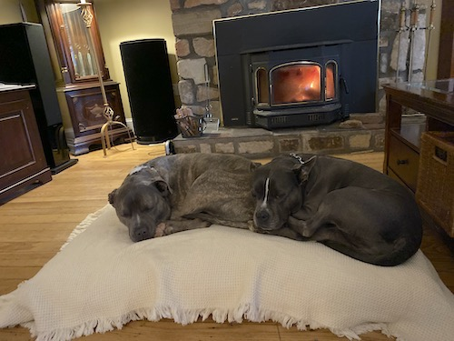 Two blue-nose pit bull dogs laying down on a tan dog bed in front of a lit fireplace