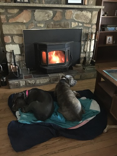 Two large breed dogs laying in front of a lit wood burning stove
