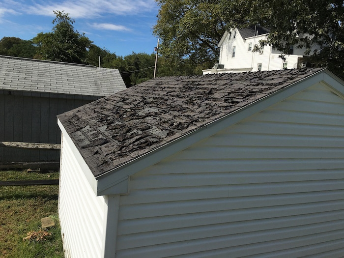 A white shed with black shingles that are curled and worn out. There is another gray shed and a white farm house behind it.
