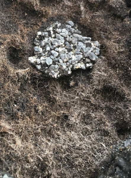 An old roof shingle that is warn down. You can see a web of white glass fibers around the small patch of asphalt that is left.