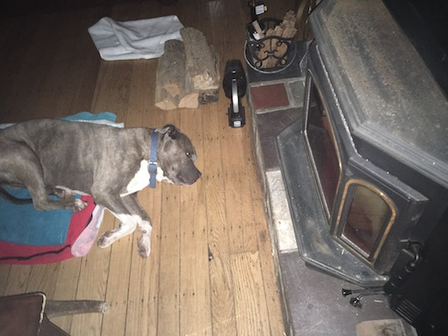 A gray and white large breed dog laying down on a hardwood floor in front of a wood burning stove