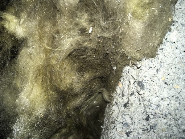 Close up of spun glass that has mold and dirt in it next to a pile of drywall dust.