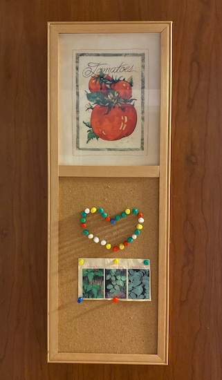 A brown cork board with decorative tomatos at the top and a synthetic cork board below with push pin thumb tacks shaped like a heart and a picture of poison ivy, poison oak and poison sumac pinned to the board hanging on a wall